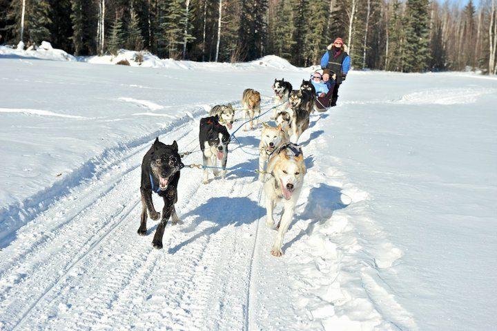 dogsled-ride-hagephoto
